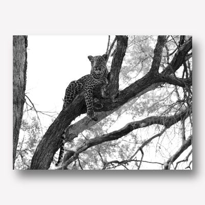 LEOPARD IN TREE WALL ART | FREE USA SHIPPING | WWW.WALLART.BIZ