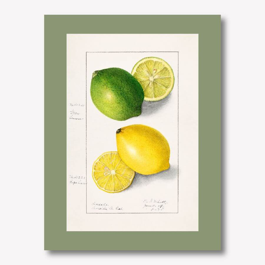 Vintage Watercolor Fruit Art | FREE USA SHIPPING | WallArt.Biz