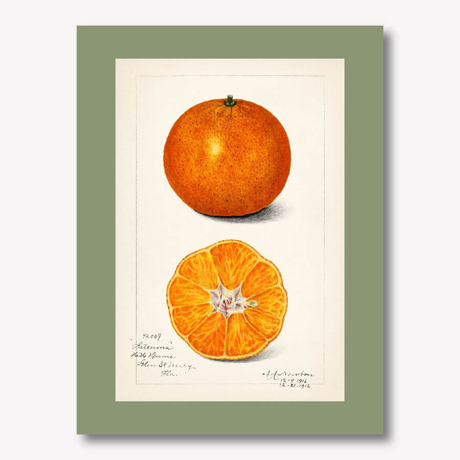 Orange Vintage Watercolor illustration | FREE USA SHIPPING | www.wallArt.Biz