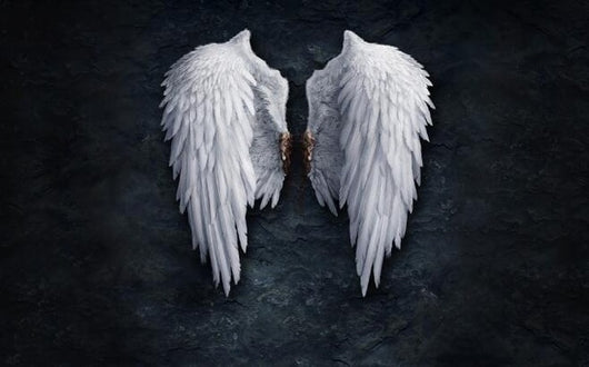 White Angel Wings & Black Background