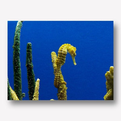 Seahorse Blue & Yellow| Free USA Shipping| www.wallart.biz