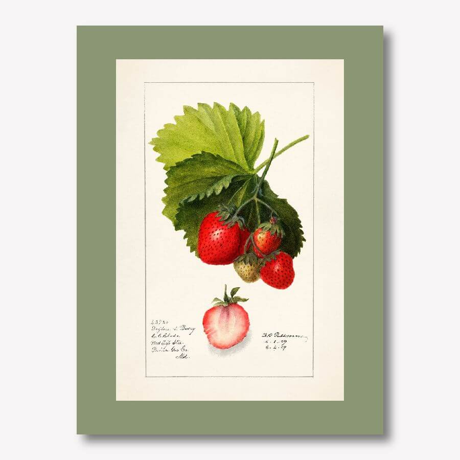 Vintage Watercolor  Strawberry  home decor| FREE USA SHIPPING | www.WallArt.Biz