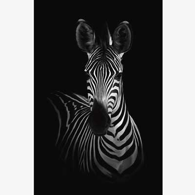 Zebra Canvas Wall Art for living room | Free USA Shipping | www.wallart.biz