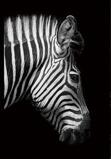 Zebra Canvas Artwork, Free USA Shipping | www.wallart.biz