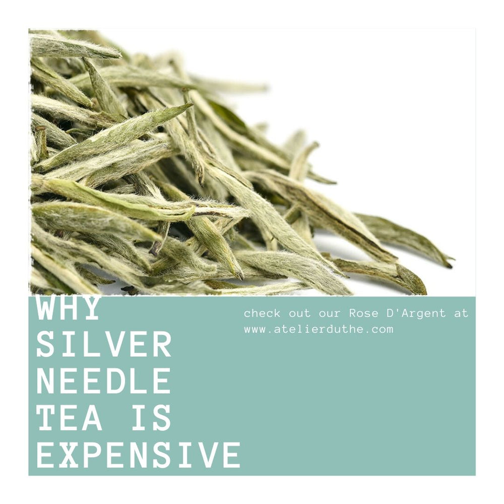 Why Silver Needle Tea Is Expensive