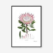 Load image into Gallery viewer, King Protea - White - Art Print