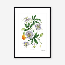 Load image into Gallery viewer, Passion Flower - White - Art Print