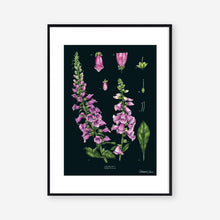 Load image into Gallery viewer, Foxglove - Black - Art Print