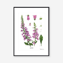 Load image into Gallery viewer, Foxglove - White - Art Print