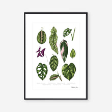 Load image into Gallery viewer, Houseplants - Art Print