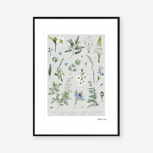 Botanical 'Ethereal' - Art Print