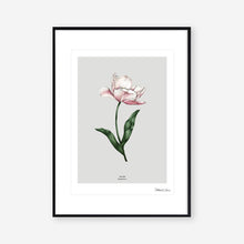 Load image into Gallery viewer, Botanical Tulip 'Spring Blossom' - Art Print