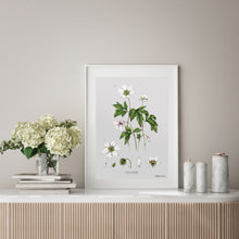 Load image into Gallery viewer, Wood Anemone - Art Print