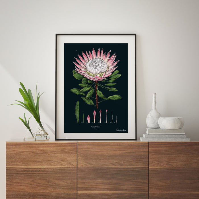 King Protea - Black - Art Print