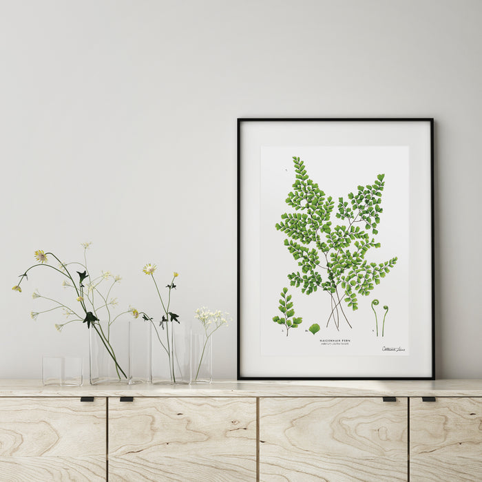Maidenhair Fern - Art Print