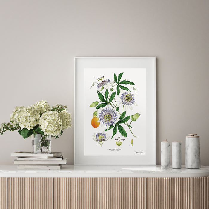 Passion Flower - White - Art Print