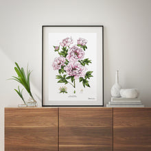 Load image into Gallery viewer, Tree Peony - Art Print