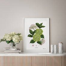 Load image into Gallery viewer, Hydrangea - White - Art Print