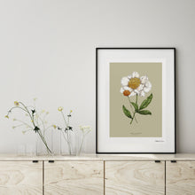Load image into Gallery viewer, Botanical Peony 'Spring Blossom' - Art Print