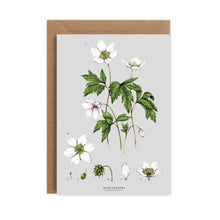 Load image into Gallery viewer, Botanical 'Wood Anemone' Species Card