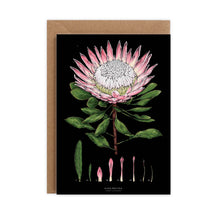 Load image into Gallery viewer, Botanical 'King Protea - Black' Species Card
