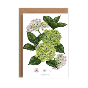 Botanical 'Hydrangea' Species Card