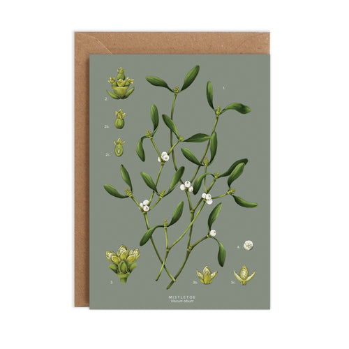 Mistletoe Species - Christmas Card