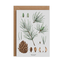 Load image into Gallery viewer, White Pine Species - Christmas Card