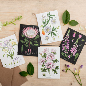 Botanical 'Passion Flower - White' Species Card