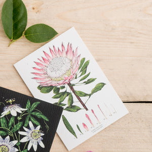 Botanical 'King Protea - White' Species Card