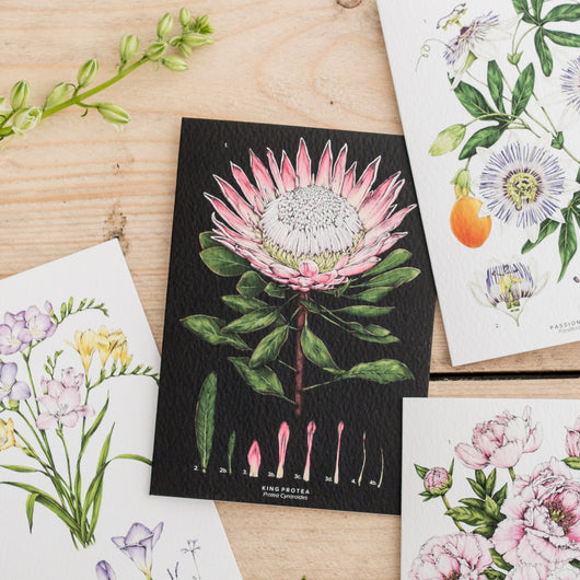 Botanical 'King Protea - Black' Species Card