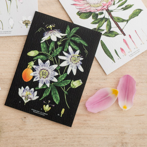 Botanical 'Passion Flower - Black' Species Card