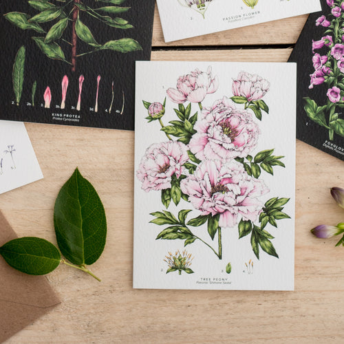 Botanical 'Tree Peony' Species Card