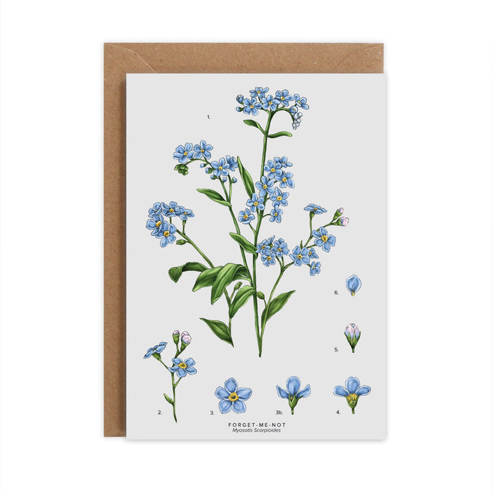 Botanical 'Forget Me Not' Species Card