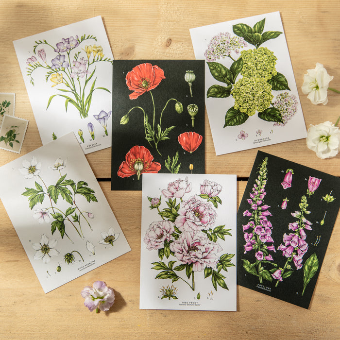 Botanical Species Postcards - Pack of 6