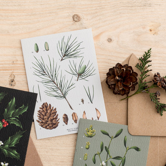 White Pine Species - Christmas Card