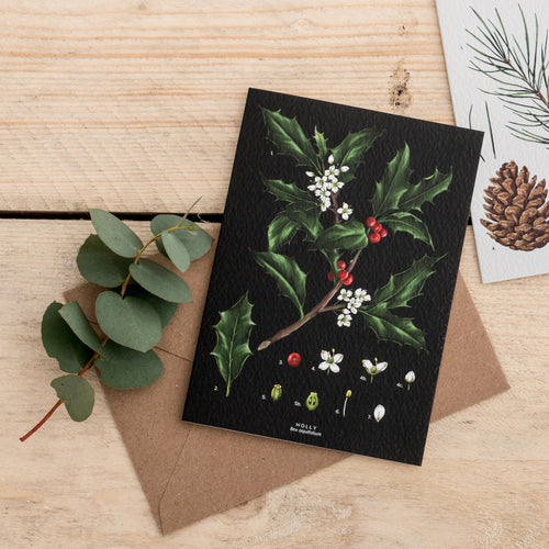 Holly Species - Christmas Card