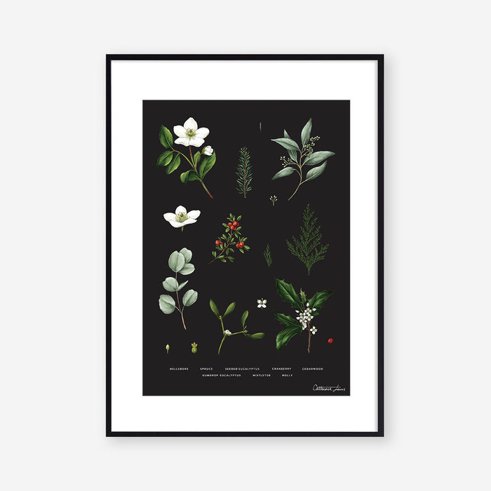 Botanical Christmas - Black-  Art Print - SALE