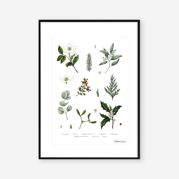 Botanical Christmas - White-  Art Print - SALE