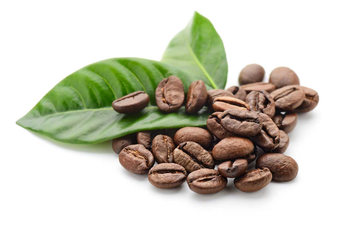 Fine green coffee beans - eco friendly