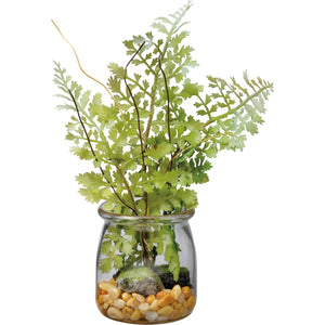 Maidenhair Fern in Glass Jar