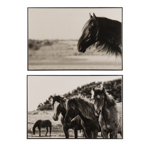 Black & White Horse Photography Wall Decor