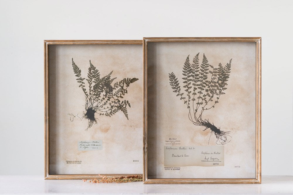Wood Shadow Box Framed Wall Decor w/ Vintage Reproduction Fern