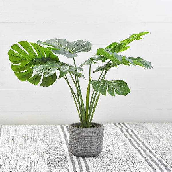 "26"" Monstera Plant in Pot"