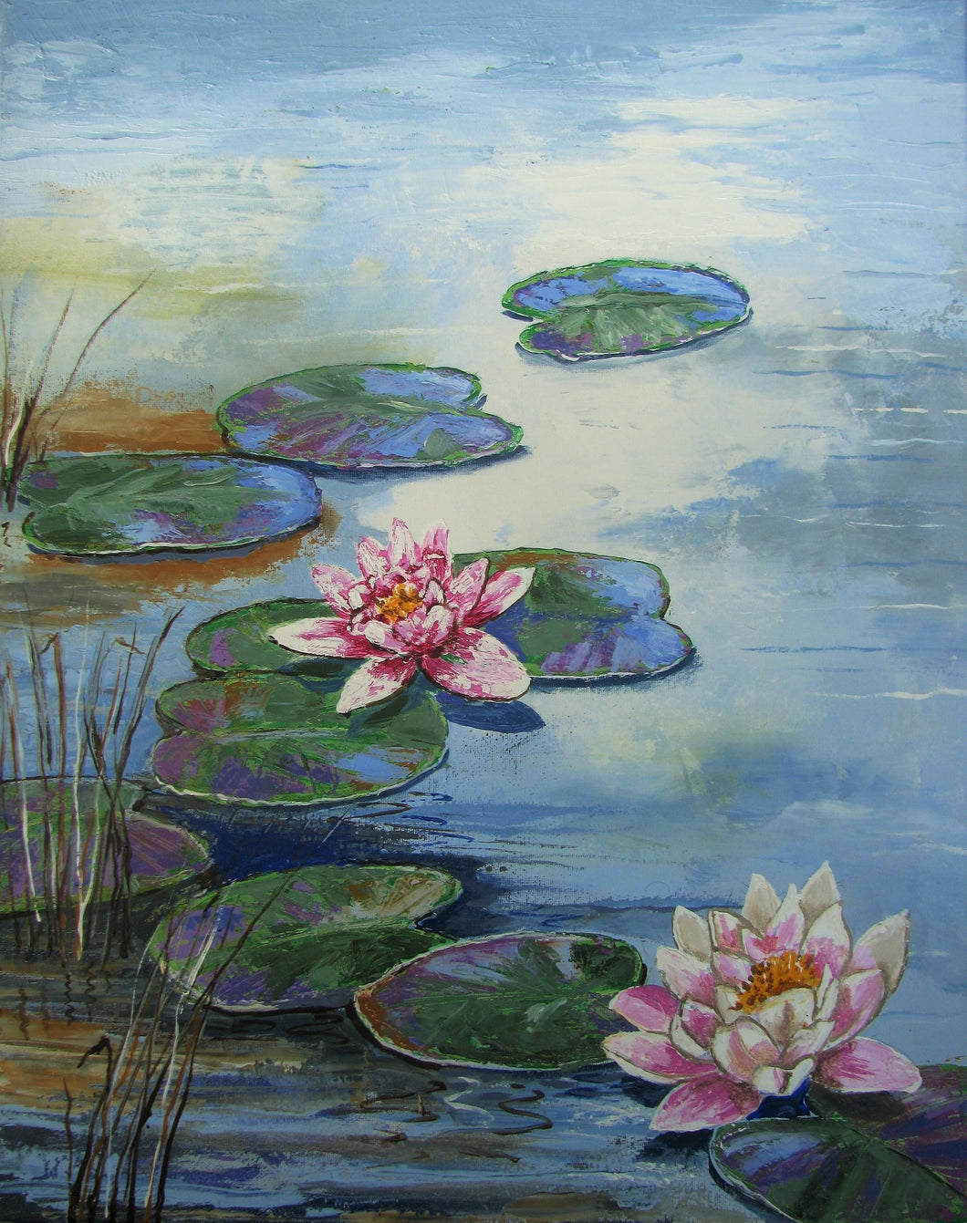 Water Lilies Pond Nympheas