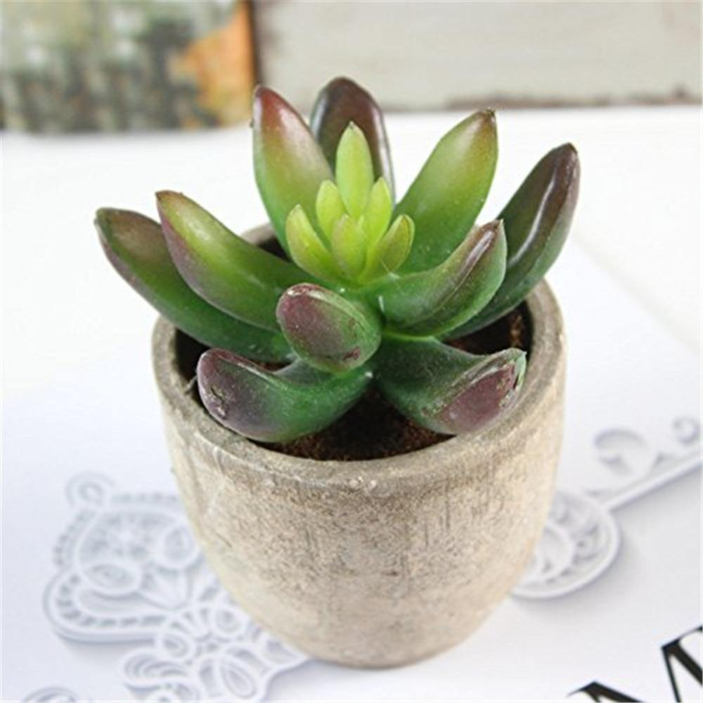 Potted Succulents - 5 pc - Hop Decor
