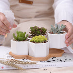 Hexagon Succulent Pots with Bamboo Stand - Hop Decor