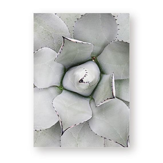Ashy Succulent Canvas Posters - Hop Decor