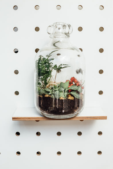 Closed Terrarium Workshop - 4pm - 18th May at Paperdolls Market, Birmingham