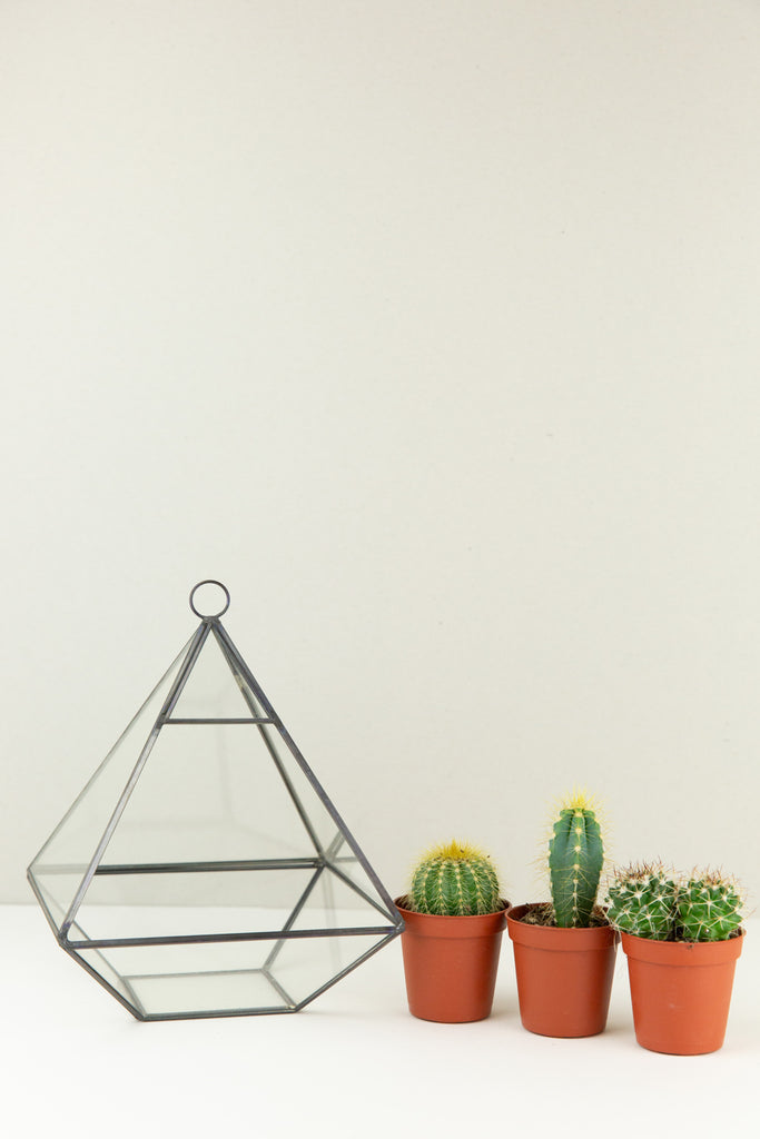 Open Terrarium Kit
